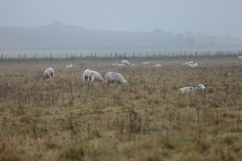 イギリスの田舎イメージ