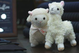 羊 アルパカ
